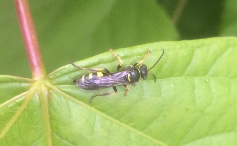 17/30 Wasp