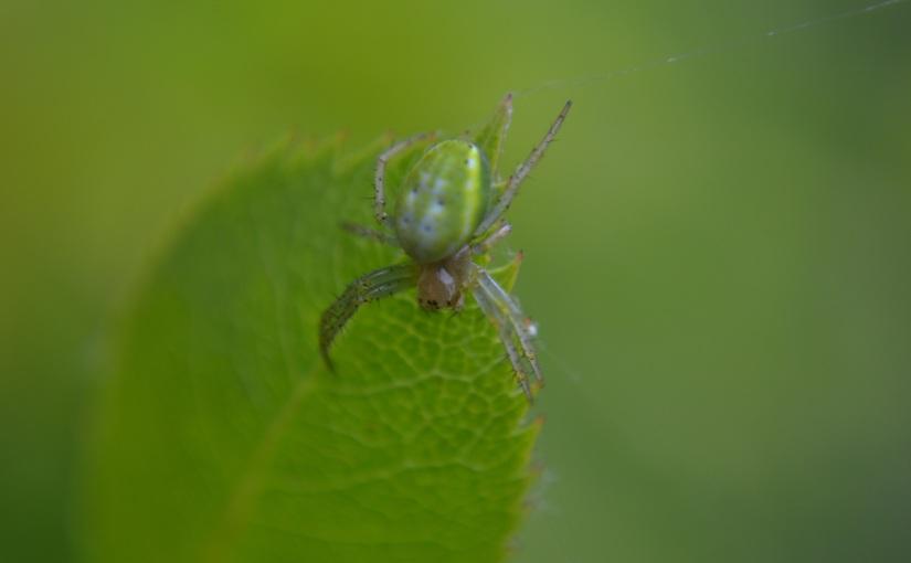 21/30 Spider