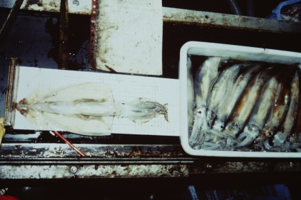 Monitoring and recording squid, 1988