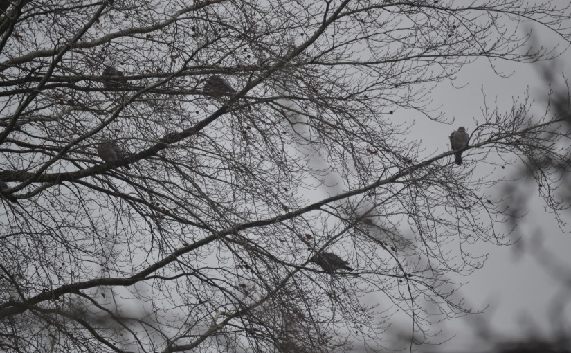 Squat pigeons