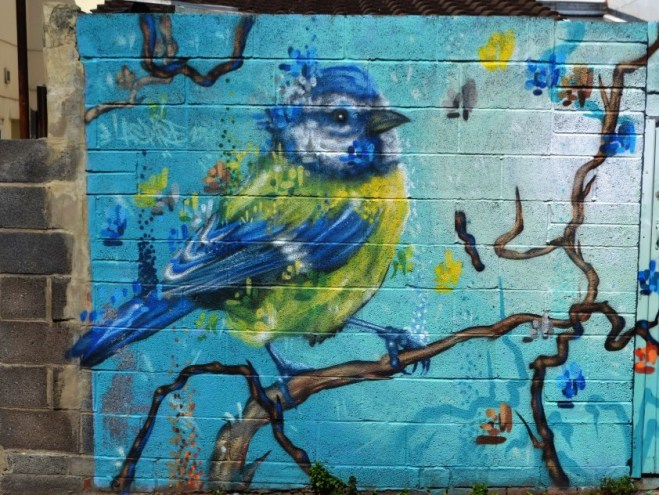 Aspire, blue tit, Devon Road, Bristol, May 2016