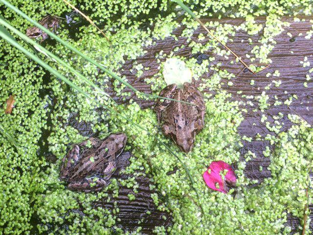 The frog and theprincess