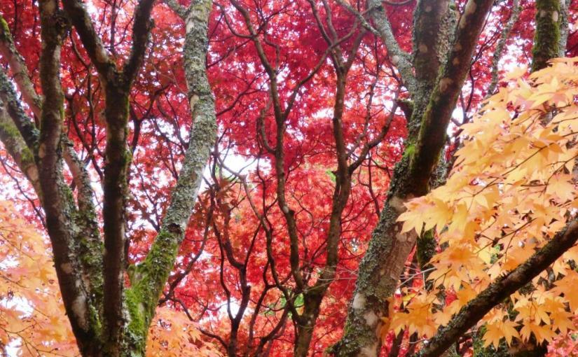 Westonbirt Arboretum, Tanka
