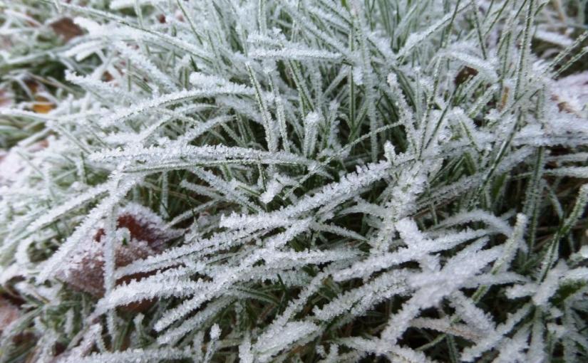 Frost haiku