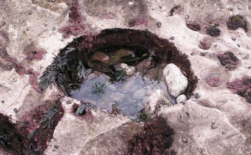 Rockpool in the Gower, Haiku