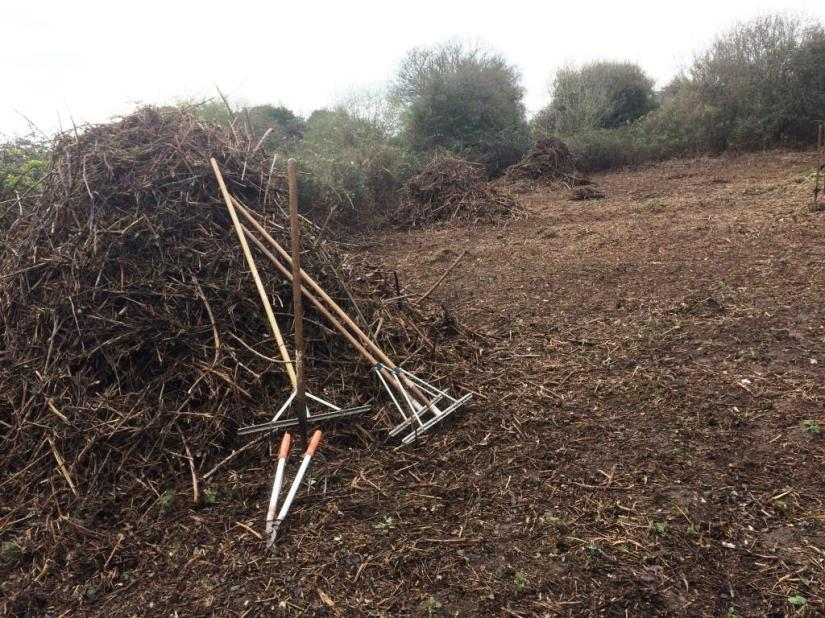 Clearing bramble brush to create a meadow area, Manor Woods Valley, Bristol
