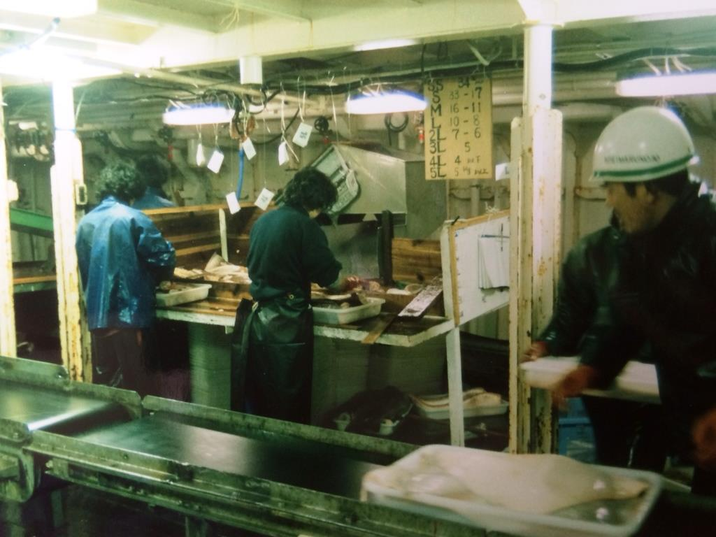 Crew on the Koie Maru 30 processing long-line caught fish, Falkland Islands 1988