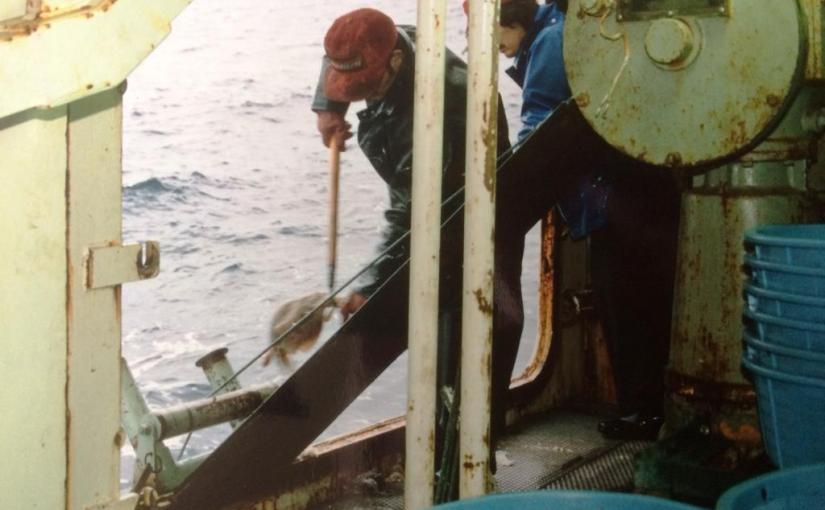 Hauling the long line. Falkland Islands 1988.