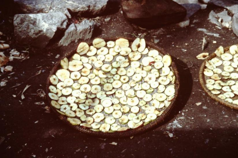 Apples drying, Nepal, 1999, haiku