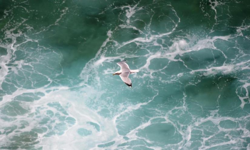 Gull, Cornwall, Haiku