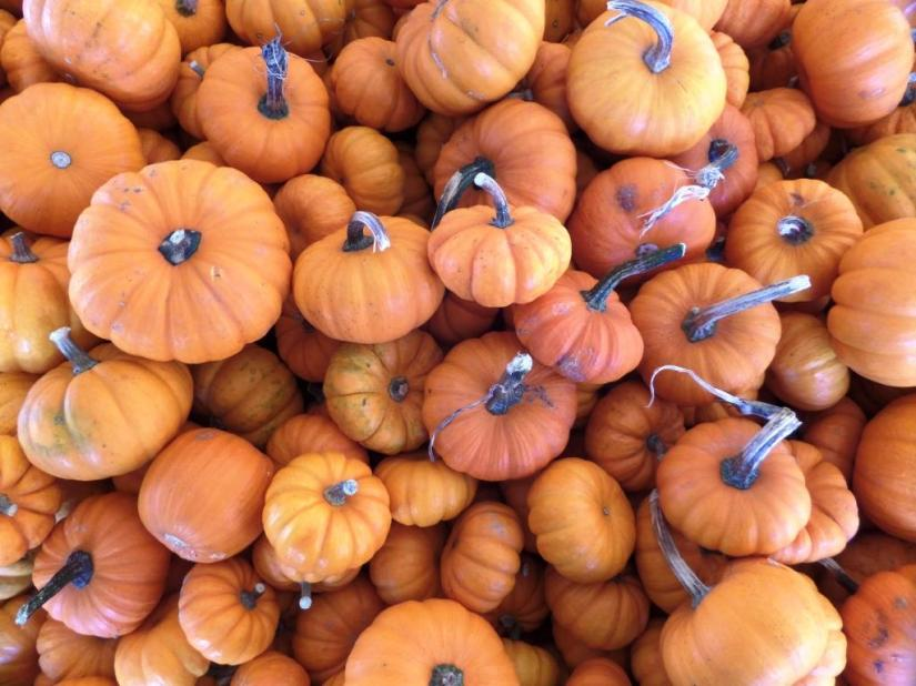 Pumpkin haiku