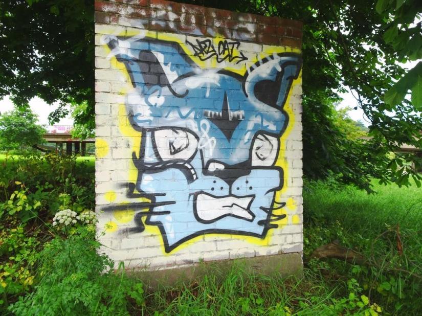 Daz Cat, River Avon, Bristol, June 2018