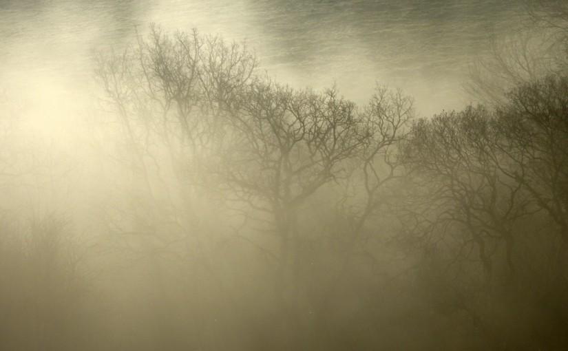Hole Farm, Mist, Haiku, December 2018