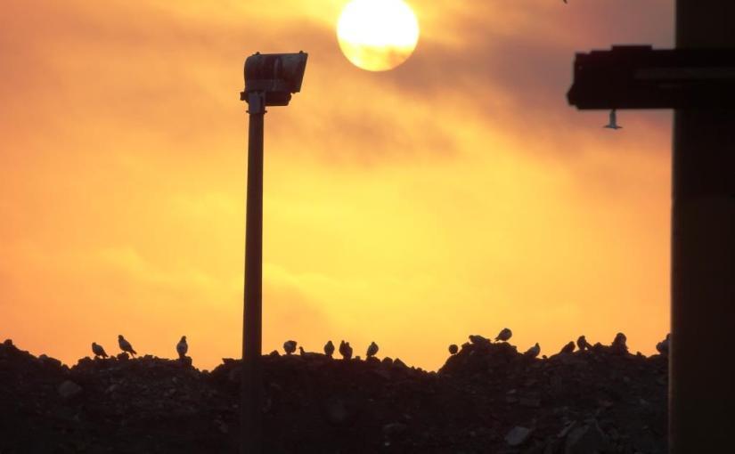 Pigeons at dawn, Temple Meads, Bristol, April 2019