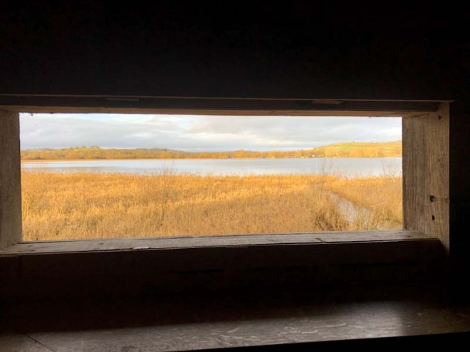 Reedbeds, Prince of Wales bird hide, Llangorse Lake, Wales, December 2019