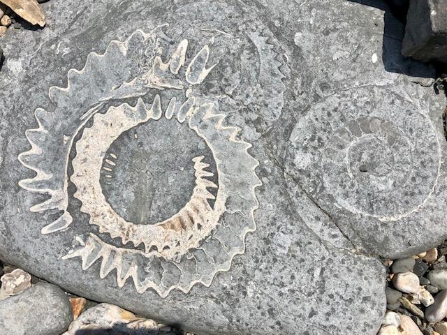 Ammonites, Lyme Regis, July 2021